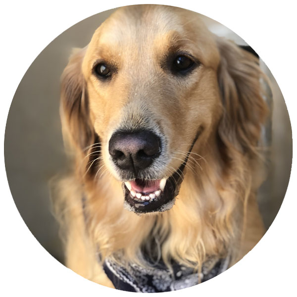 Doggie Day Care Services in Chambersburg, PA