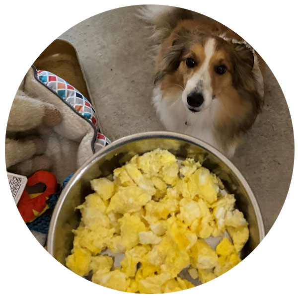 Scrambled Eggs Treat Services