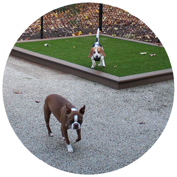 Dog Boarding Services in Chambersburg, PA